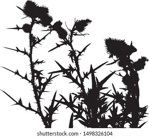 Thistle flowers silhouette close-up. Small flowers in a bouquet on long stems. Meadow flowers. Long narrow leaves on stems with small flowers. Isolated vector illustration. Black on white.