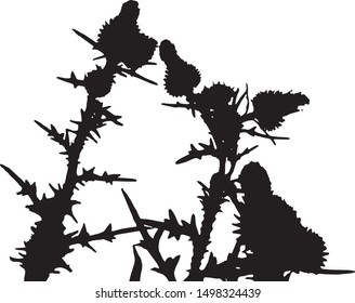Thistle flowers silhouette on the stems. Small flowers in a bouquet on long stems. Meadow flowers. Long narrow leaves on stems with small flowers. Isolated vector illustration. Black on white.