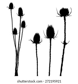 Thistle - group and separate - isolated - black silhouette - vector