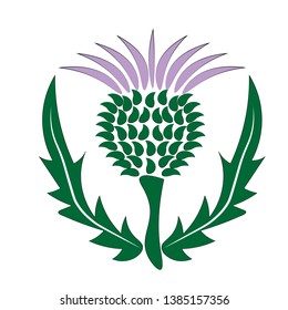 thistle Scotland symbol and emblem