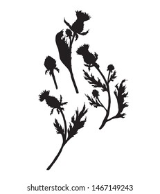 Thistle set. Thistle flower silhouette. Vector illustration. White background.