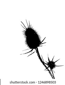 Thistle silhouette vector.