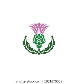 Thistle - symbol of Scotland, UK. Vector illustration