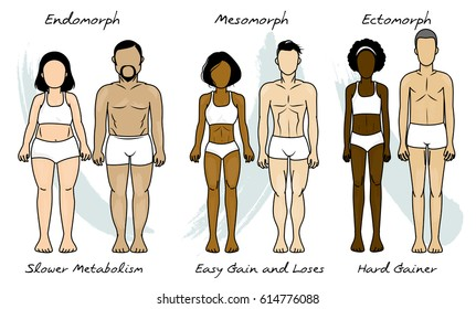 The three basic human body types:  ectomorph, mesomorph and endomorph