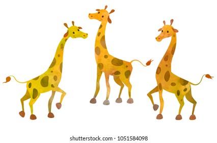 Three cartoon giraffes. Clip art design illustration on white background. Watercolour imitation.