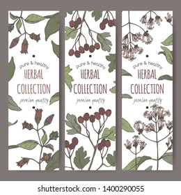Three color labels with Atropa belladonna aka belladonna, Cinchona officinalis aka quinine and Crataegus monogyna aka common hawthorn sketch. Green apothecary series.