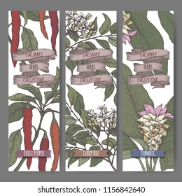 Three color labels with chili pepper, curry tree and turmeric sketch. Culinary herbs collection. Great for cooking, medical, gardening design.