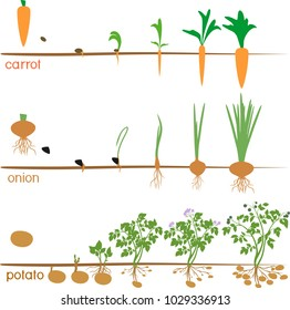Three cycles of growth of agricultural plants