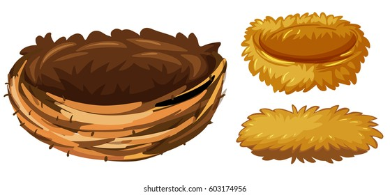 Three different types of bird nests illustration