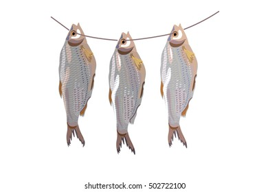 Three dried fish hanging on a rope. Vector illustration