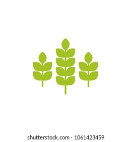 Three ears of wheat, barley or rye. Green icon Icon isolated on white. Logo for eco company, agriculture, nature firm, ecology, healthy organic and farm fresh food. Vector Illustration