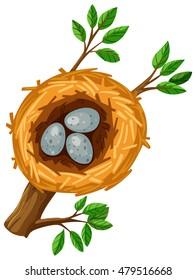 Three eggs in the bird nest illustration