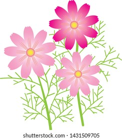 Three flowers called cosmos famous for blooming in autumn