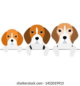 three generations of Beagles border