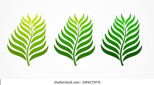 Three green palm leaves. Vector illustration.