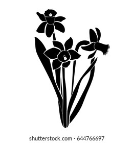 Three hand drawn narcissus flowers. Elegant vintage card. Black narcissus with white stroke. Vector
