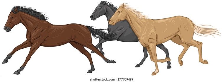 Three isolated galloping horses