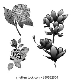 Three kind of flowers roses, peony and magnolia in black and gray colors