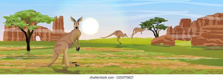 Three large red kangaroos on the Australian plains. Dry grass, rocks, acacia trees and eucalyptus trees. Wild nature of Australia. Realistic vector landscape.