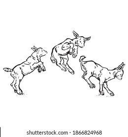 Three little goats jumping and frolicking