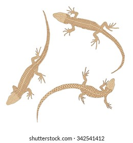 Three lizards with a long tail. Top view. Isolated on white background. Reptile sand color. Hand Drawn. Scales Doodle. Vector illustration.