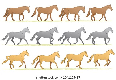 Three Natural Horse Gaits Sequence