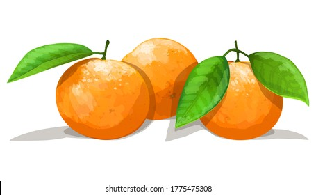Three oranges with leafs isolated on white background. Vector illustration