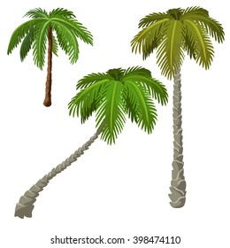 Three palm trees isolated on white background. Vector illustration.