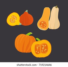 Three pumpkin species - cucurbita maxima, red kuri, butternut squash - vector illustration