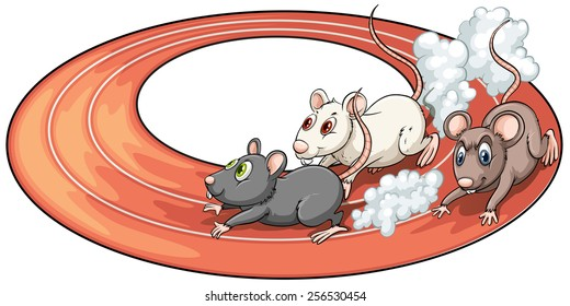 Three rats racing above at the back of a plate on a white background