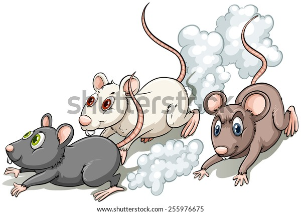 Three rats racing on a white background
