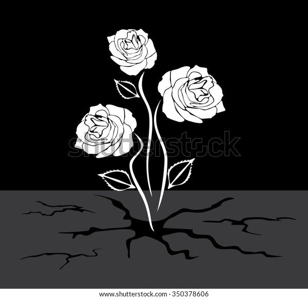 three-roses-grows-through-asphalt-600w-3