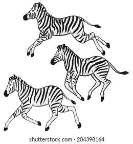 Three running zebras illustration