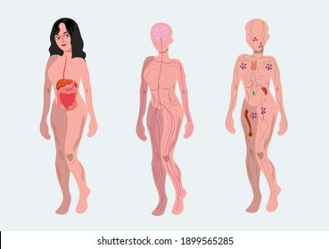 three silhouettes of female body with digestive nervous and immune system