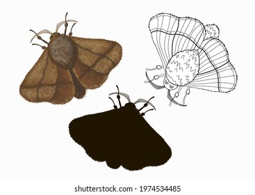 Three species of Malacosoma butterflies in cartoon style: brown, doodle and black silhouette. Stock illustration isolated on white background.