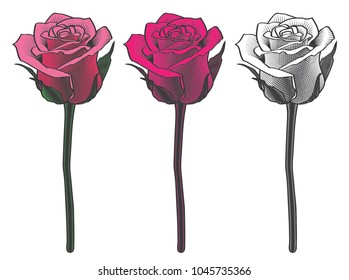 three vector drawings of vintage flowers clipart roses