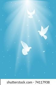 Three  white dove