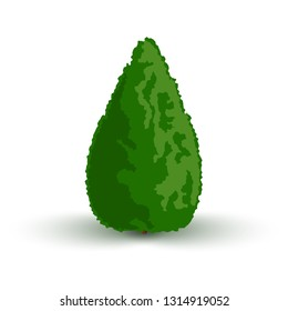 Thuja is an evergreen plant. Cone-shaped. Icon for web design Isolated on white background vector illustration.