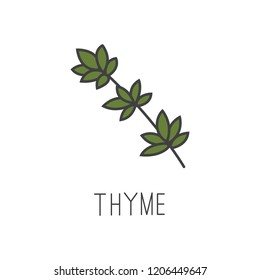 thyme line vector illustration, cooking isolated icon.