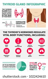 Thyroid gland infographic template. Hormones vital body functions design elements.