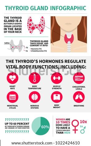 Thyroid Gland Infographic Template Hormones Vital Stock Vector ...