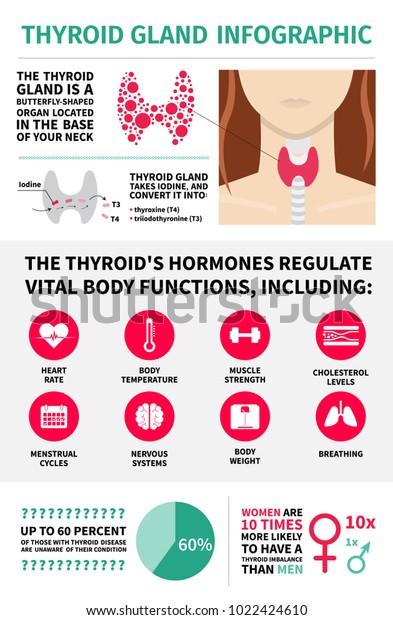 Thyroid Gland Infographic Template Hormones Vital Stock Vector
