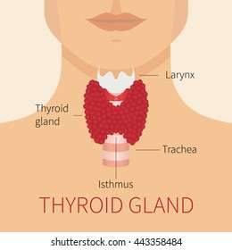 Thyroid gland and trachea scheme shown on a silhouette of a man. Human body organs anatomy icon. Medical concept.