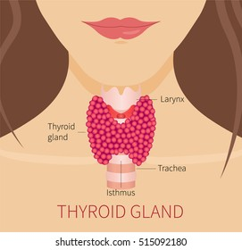 Thyroid gland and trachea shown on a woman's silhouette. Medical concept. Anatomy of people. Vector illustration.