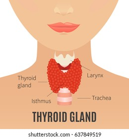Thyroid gland vector illustration. Thyroid gland and trachea shown on a silhouette of a woman. Body anatomy sign. Human endocrine system. Medical internal organ vector illustration.