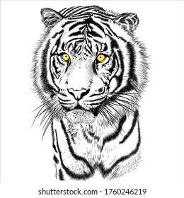 Tiger animal illustration, nature conservation vector