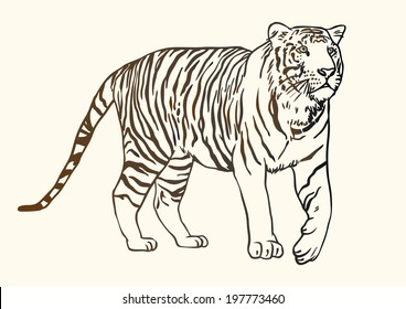 Tiger contour black and white drawing