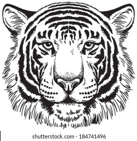 Tiger face: Black and white vector sketch