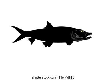 Tiger Fish Silhouette