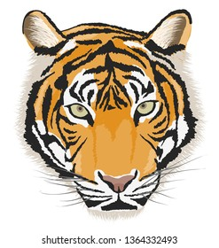 Tiger head, Tiger face vector sketch